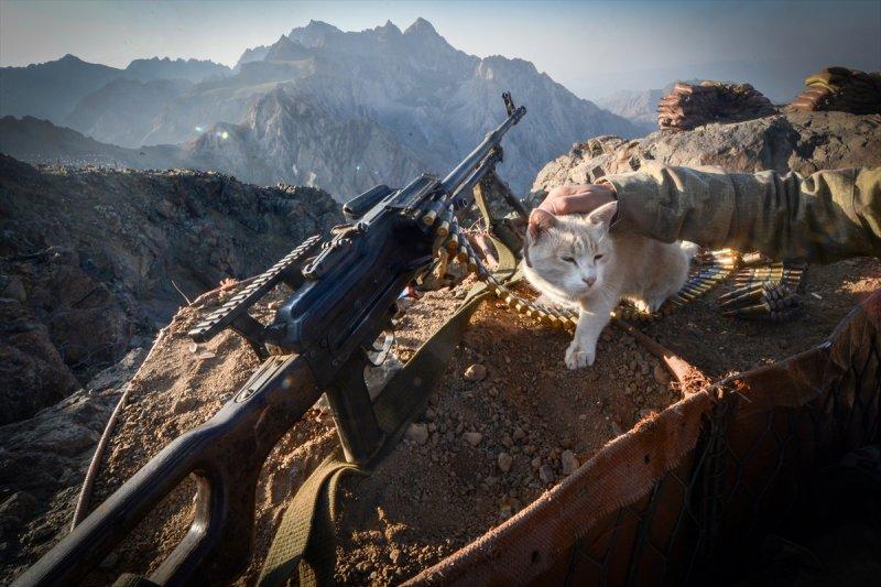 Kediler kahramanlara eşlik ediyor 1