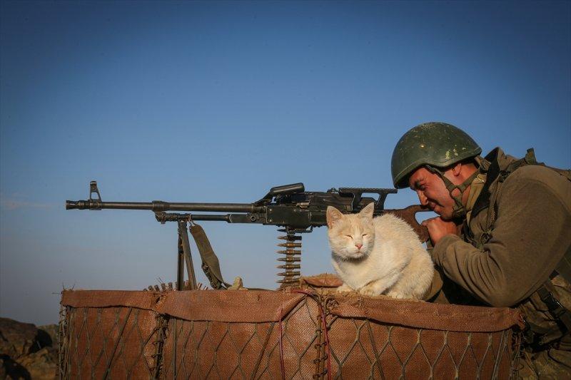 Kediler kahramanlara eşlik ediyor 10