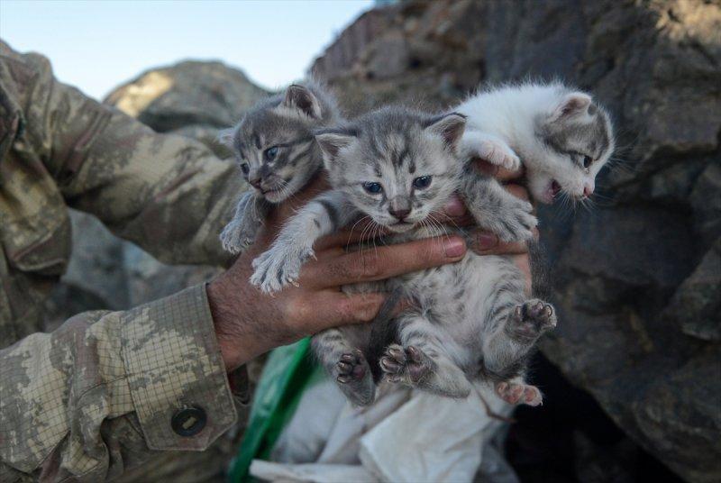 Kediler kahramanlara eşlik ediyor 13