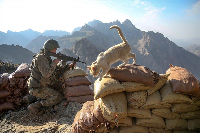 Kediler kahramanlara eşlik ediyor 14