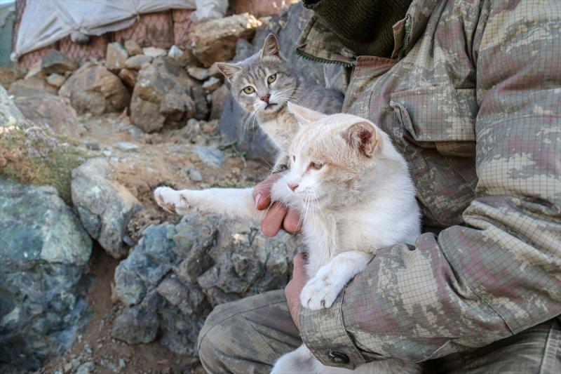 Kediler kahramanlara eşlik ediyor 6