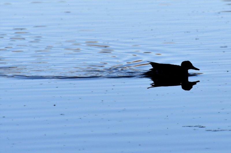 Ördek Gölü yüzeyi buz tuttu 9