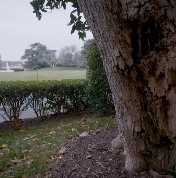 Melania'nın emri ile 200 yıllık ağaç kesilecek 3