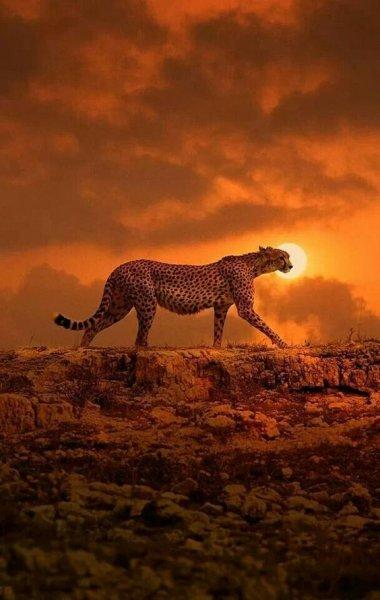 Vahşi yaşamda gün batımı 13