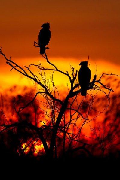 Vahşi yaşamda gün batımı 7