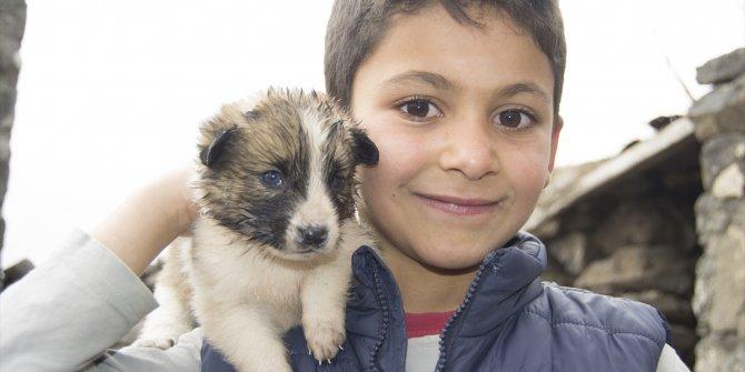 Kars'ın Arpaçay ilçesinde dört çocuk, oyun oynarken harabe bir evde