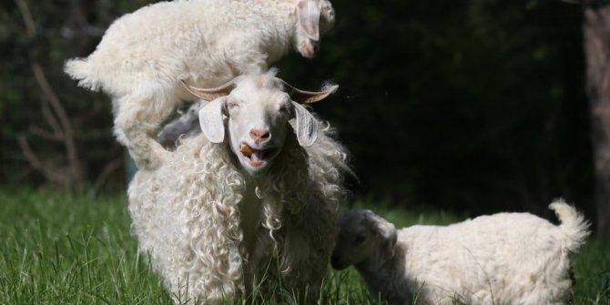 Hayvanlar aleminde 'annelik'