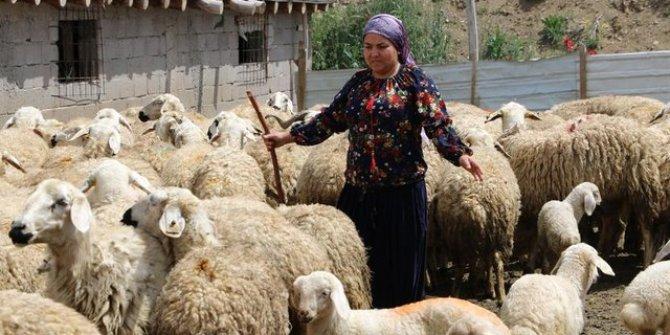 Üniversite mezunu kadın niğde'de çoban oldu