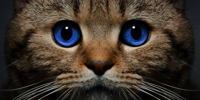 8 Ağustos Dünya Kediler Günü