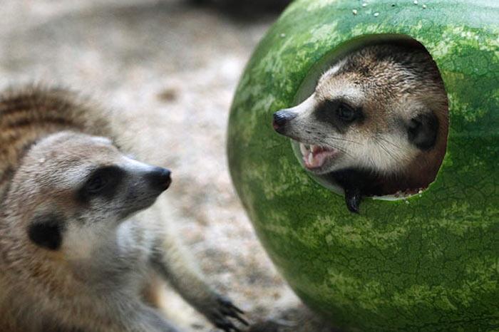 Dünyanın en komik hayvanları 1
