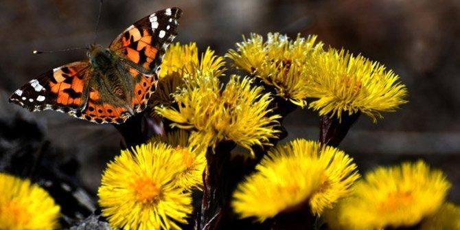 Şehitler diyarı çiçeklerle baharı karşıladı