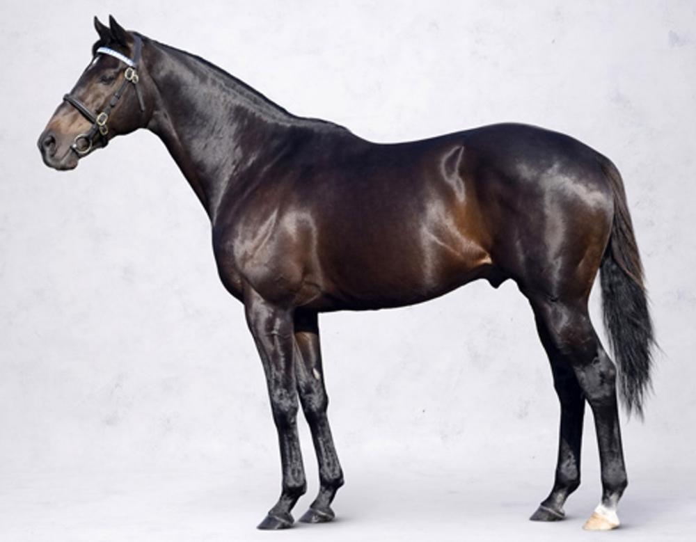 политтехнологов, лошадь на весь рост картинки лучше небольших