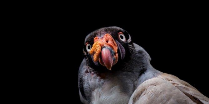 Kaçakçılıktan kurtarılan hayvanlar! (Boz ayı,Macaw papağanı,...)