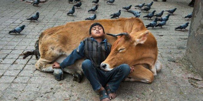 İnsanlar ve hayvanların ilişkilerini gösteren fotoğraflar