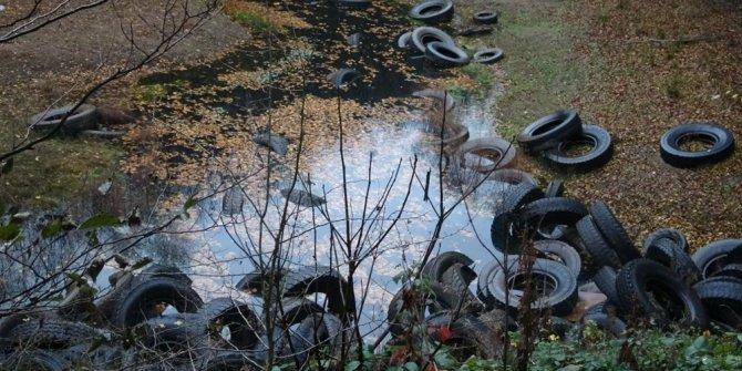Doğa katliamı: Ormanlık alan lastik tarlasına döndü