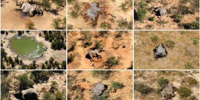 330 fil hayatını kaybetmişti: Nedeni belli oldu