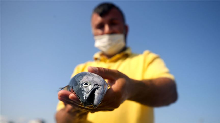 Batı Karadeniz'de palamut bolluğu yüzleri güldürdü