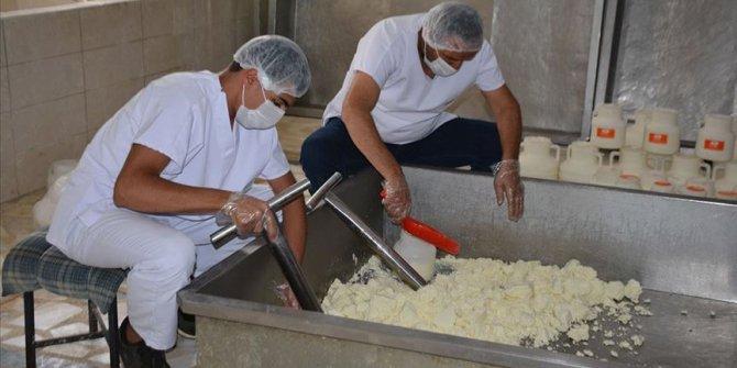 Bitlisli işletmeci devlet desteğiyle yılda 200 ton peynir üretiyor