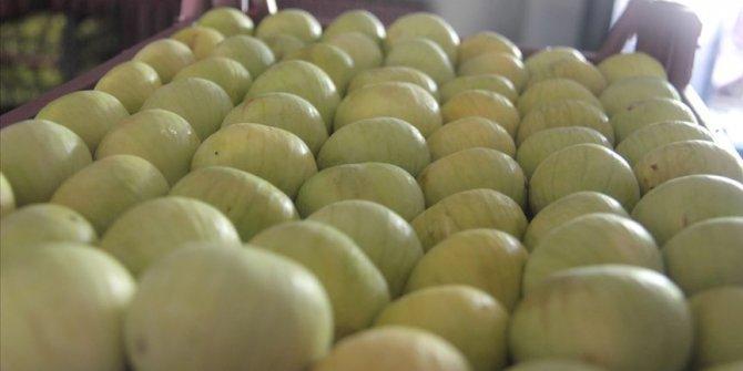 Taze incir ihracatından 39 milyon dolar