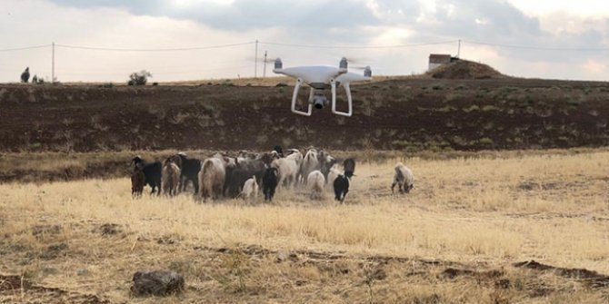 Elazığ'da kaybolan 43 küçükbaş hayvan drone ile bulundu
