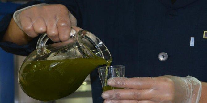 Edremit Körfezi'nde yılın ilk zeytinlerinden yağ elde edildi