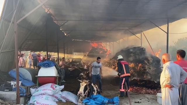 Mersin'de ahır yandı, 13 büyükbaş hayvan telef oldu