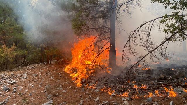 Muğla'da bir günde 15 yangın
