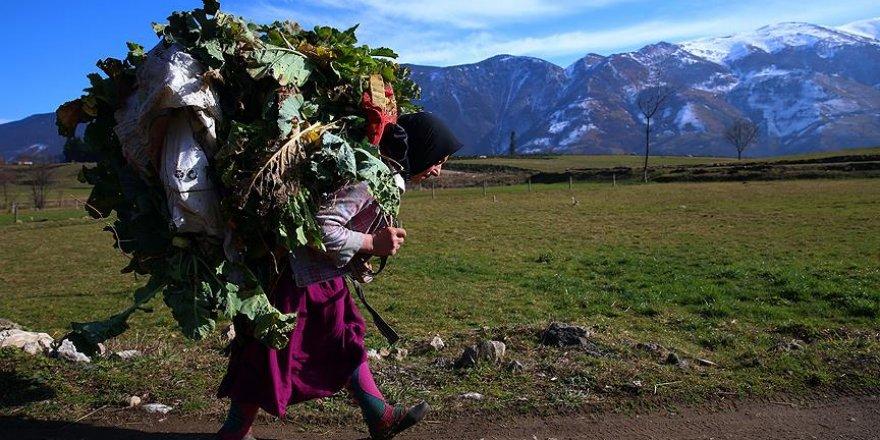 Dik yamaçların çalışkan kadınları