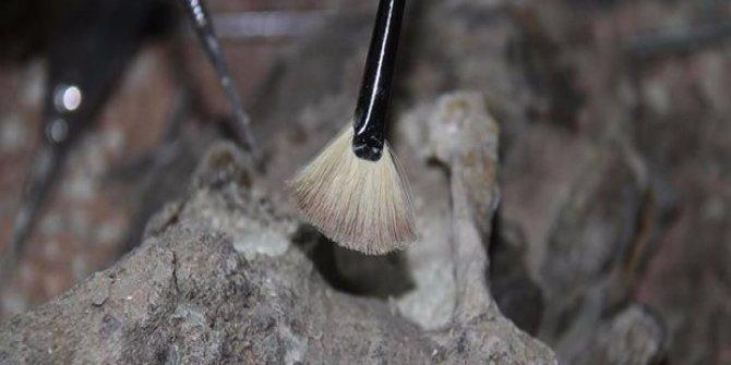 10 milyon yıllık fil fosilleri bulundu