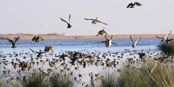 Samsun kuş cenneti kaçak yapılardan temizlendi