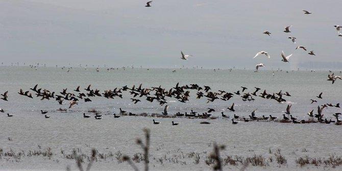 Seyfe Gölü Kuş Cenneti çeltikçi kuşlarıyla rengarenk!