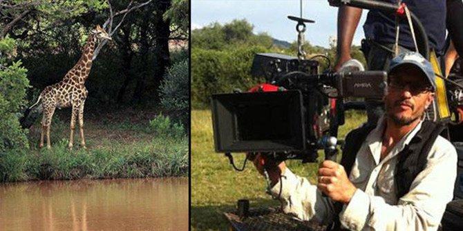 TV programı için çekim yapan yönetmeni zürafa öldürdü