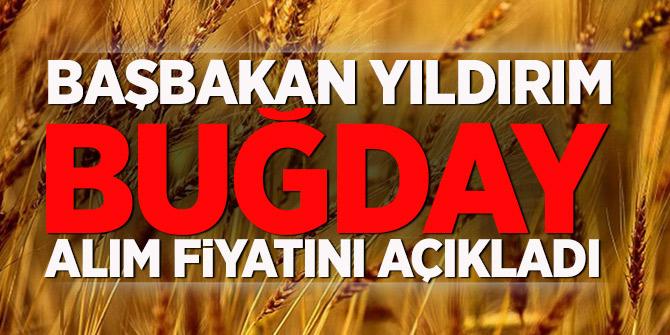 Başbakan Yıldırım buğday alım fiyatını açıkladı