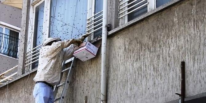 Sakarya'da arılar kent merkezine indi!