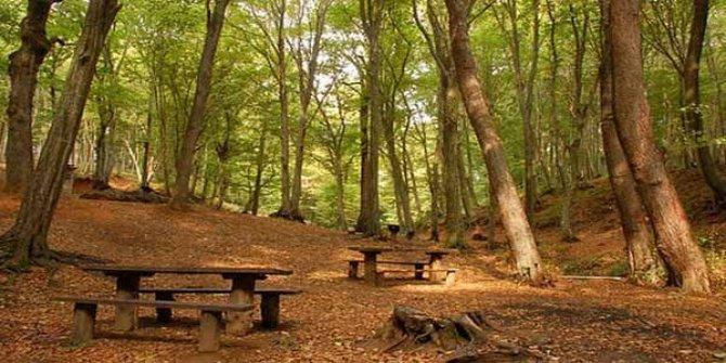 Türkiye'de orman alanı artıyor