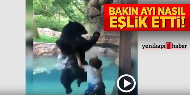 Bakın ayı nasıl eşlik etti!Hayvanat bahçesinse eğlenceli anlar