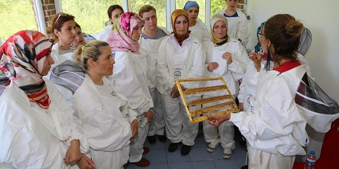 Arı Sütü Ev Kadınlarının Yeni Mesleği