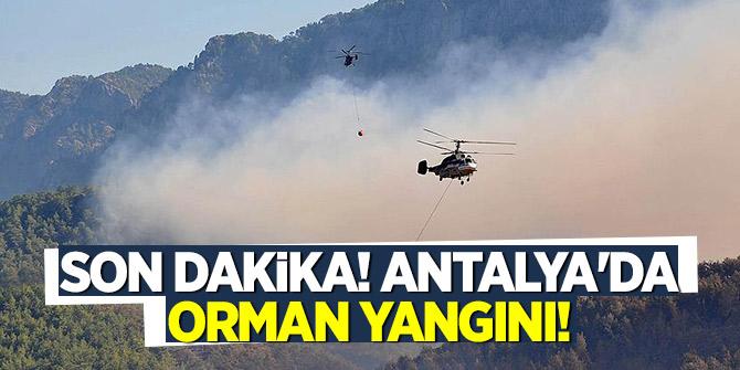 Son Dakika! Antalya'da orman yangını!