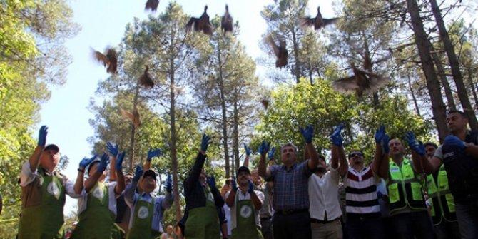 Sülünler ve keklikler doğaya salındı