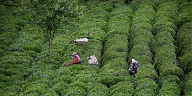 Türk çayını en çok Almanya içti