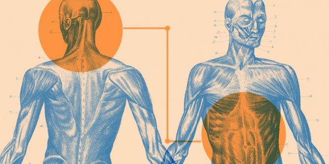 Sindirim sisteminin en önemli organı İkinci Beynimiz: Bağırsaklar..