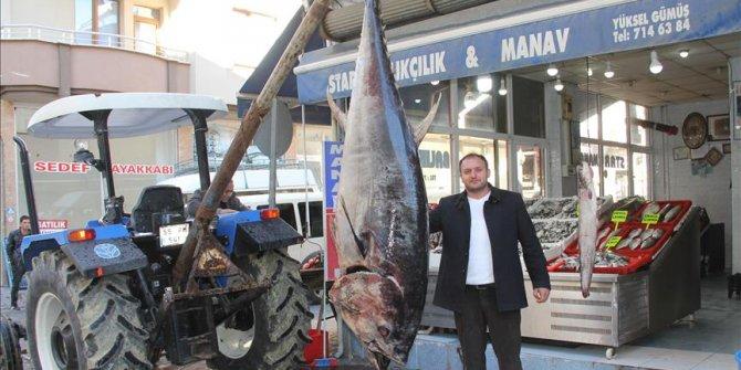 Satın aldığı 320 kiloluk orkinosu Samsun'da sergiledi!