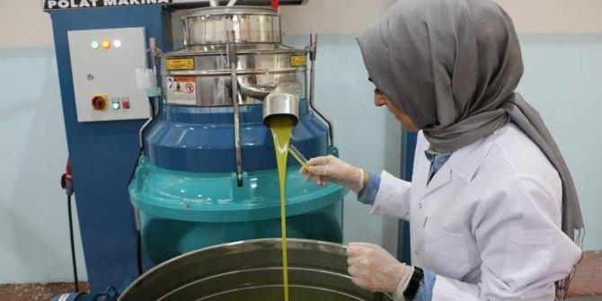 Şanlıurfa'da zeytincilik kadın eliyle işlenecek