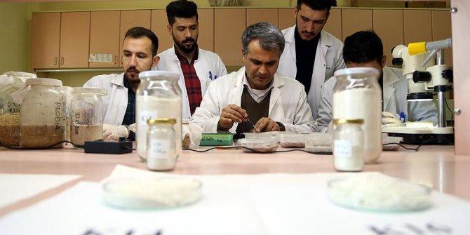 Artık böceklere karşı yerli doğal ilaç geliyor!