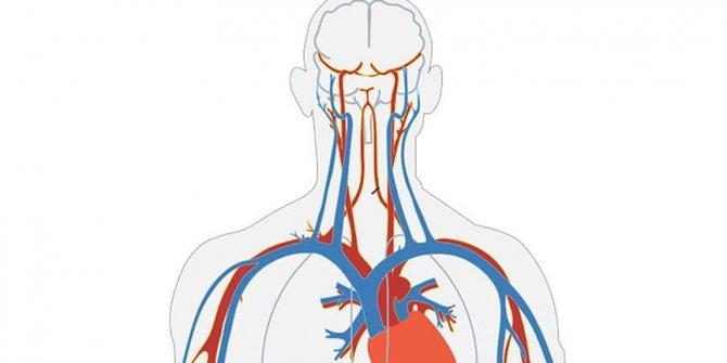 Laboratuvarda insan damarları büyütüldü