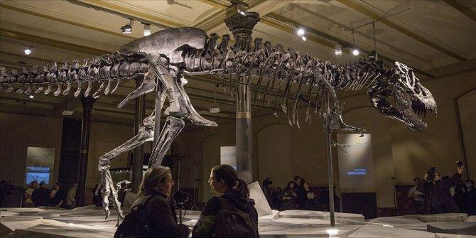 Dünyanın en büyük ve en yaşlı T-rex fosili keşfedildi