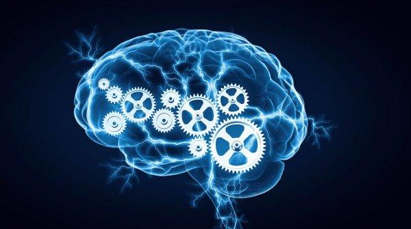 Egzersizin Beyne Etkisi