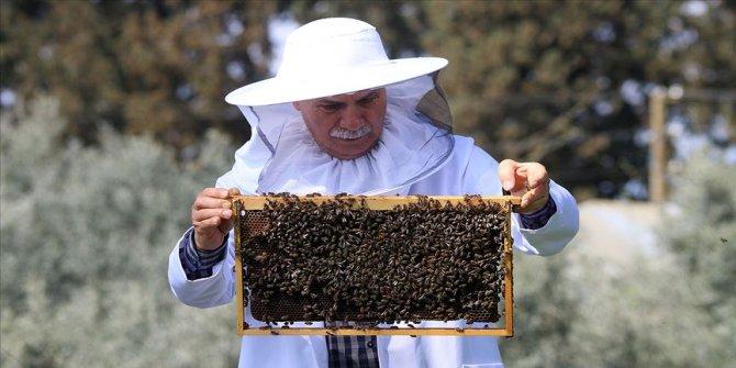 Arılar ölüyor! Bal üretimi alarm veriyor