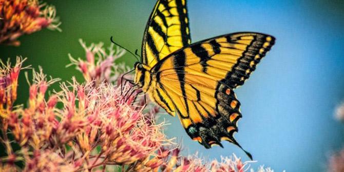5G teknolojisi doğadaki böcekleri olumsuz etkileyebilir