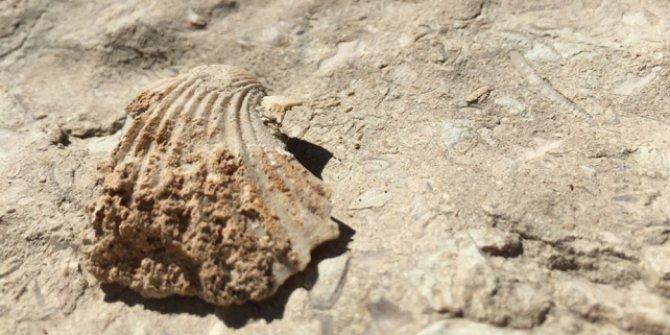 35 milyon yıllık olduğu iddia edilen fosiller incelemeye alındı